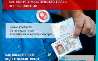 Как вернуть водительские права после лишения в 2021 году